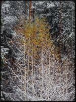 Last leaves... by Yancis