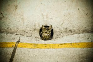 cat in the hole by yeni-raki