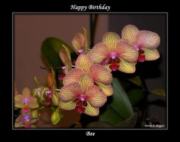 Happy Birthday Bee by David-A-Wagner