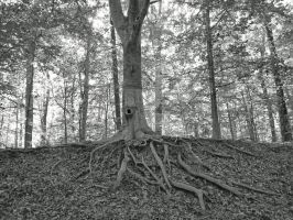 roots by stealthski22