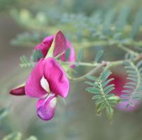 A touch of pink by tweedale23