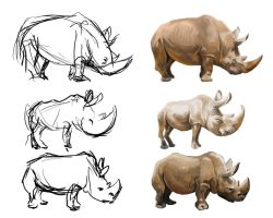 Rhinoceros 3 carictures by claireGary