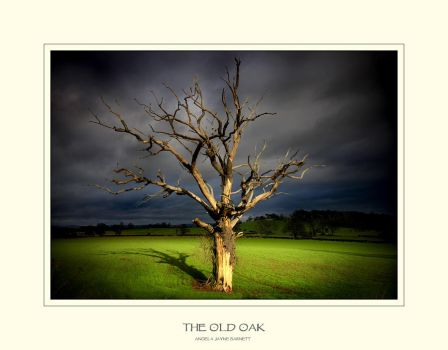 The Old Oak by ArwensGrace
