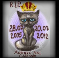 My cat - Asterix Ari Calistro, died by qwsTaion