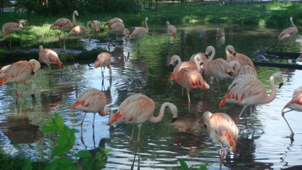 Flamingos by Xjph