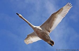 the king of the sky by MT-Photografien