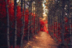 bodyguards by ildiko-neer