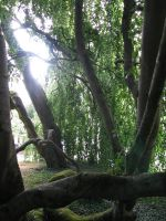 Nature 273 tree by Dreamcatcher-stock