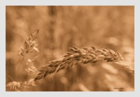 Elan Valley Grass sepia by Deb-e-ann