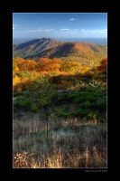 Fall Colors by Mashuto