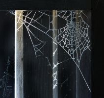FROZEN WEB 2 by TADBEER
