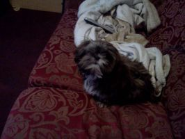 Gizmo stole my bed by ermacisback