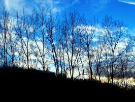 trees against sunset 2 by TuNages