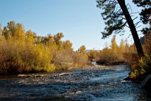South Fork Fall by melly4260