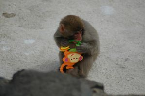 Baby Japanese Macaque (Snow Monkey) by highlyimprobable