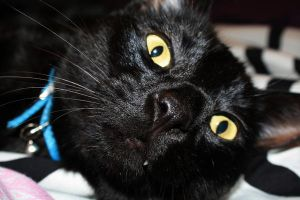 Shadow Cat stock 2 by asphyxiate-Stock