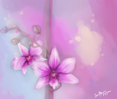 Orchid sketch by AnnaNM