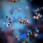 Nemo's friend by Alexandre-Bordereau