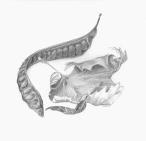 Still Lives by Allison-beriyani