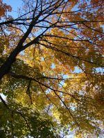 Autumn Tree Branches 1 by FantasyStock