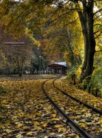 Forest Railway - Autumn 2011 by stevethesupervisor