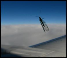 stowaway on plane by MainTower