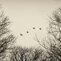four rooks by emmbbee