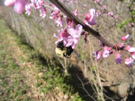 My first bee pic by Perceptor