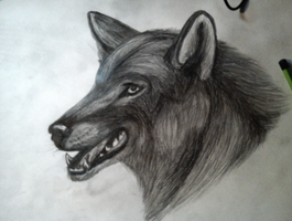 maybe... wolf again? by Onivvelle