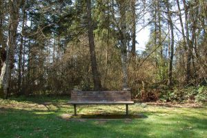 Park Bench with Trees by happeningstock
