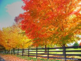 Along The Fence by jim88bro