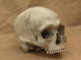 human skull 11 jpeg by Pronus