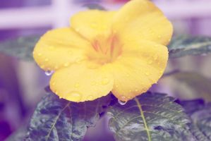Yellow drops by kathyxsmile
