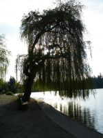 Weeping Willow by Shyruban