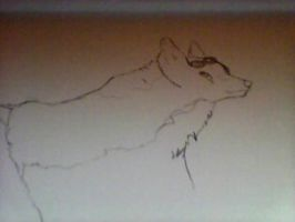 A sketch of random wolf... by MelodyBlood