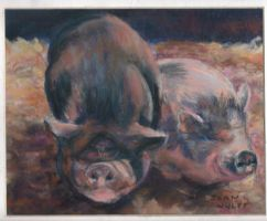 pot bellied pigs  2 by Wulff-Arts