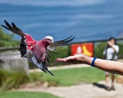 Galah stealing money by wolfhound2000