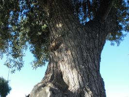 Olive Tree by Whimsical-Elegance