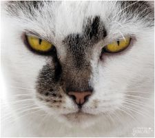 A cat with a cat in the face by AStoKo