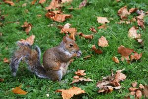 London Tree Squirrel by yunaayame