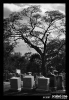 Day at the Cemetery by PhotographybyVictor