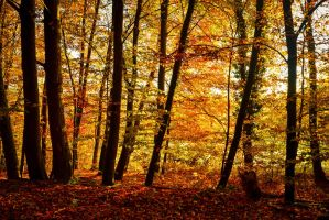Autumn Magic II by Aenea-Jones