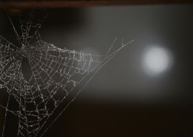 Spider Web by Haxonite