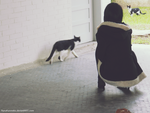 DRRR!: Even the cats dislike you , Izaya. by ryouism