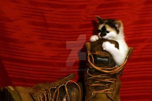 Puss in Boots by Nebey