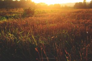 Fields of gold by firepaved