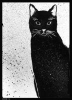 Black cat by Ostrze