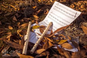 Autumn Melodies: Music of the forest by abravewolf