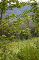 Forest Background by ArtistStock