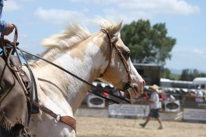 Taupo Rodeo 211 by Sooty-Bunnie